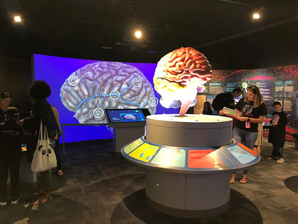 The new human brain exhibit at the Science Center and Aquarium