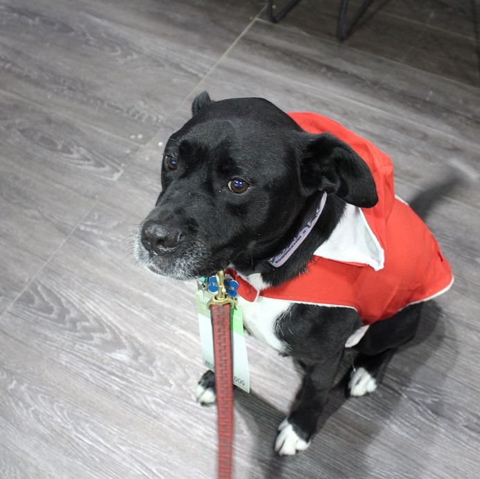 A handsome, lightweight rain jacket for your super dog!