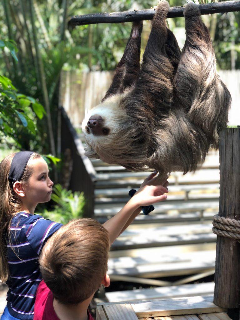 Visiting Wilbur the local Palm Beach celebrity at the Palm Beach Zoo.