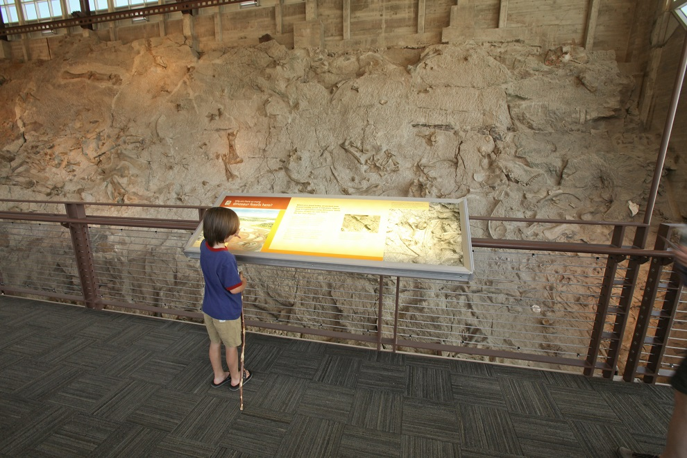 Wall of Bones, Dinosaur National Monument