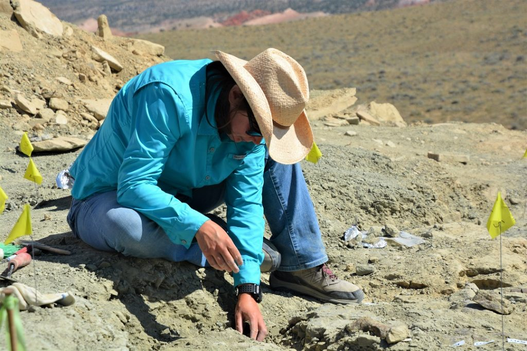 Dr Victoria Edgerton at work digging for fossils in Wyoming this summer