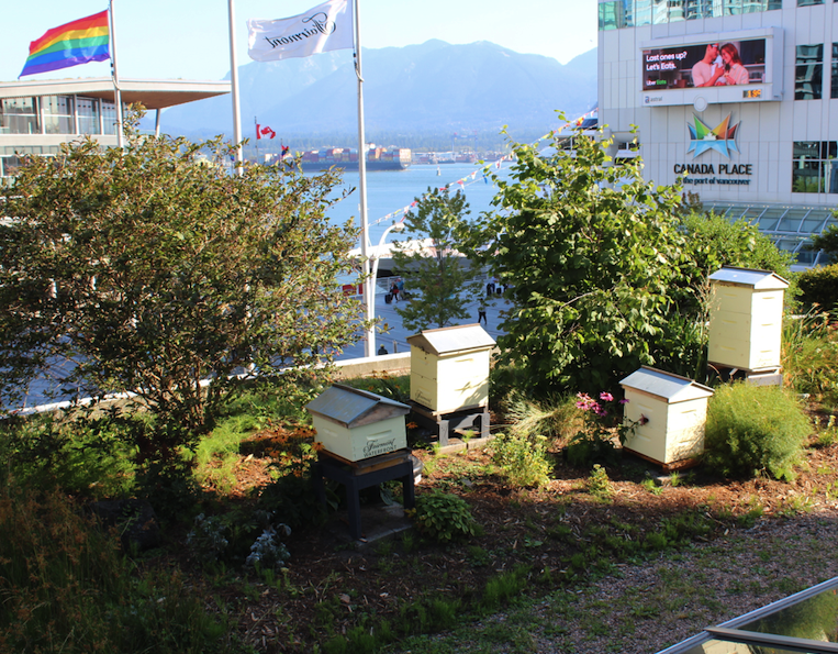 Honey Bee Hives on rooftop at Fairmont Waterfront