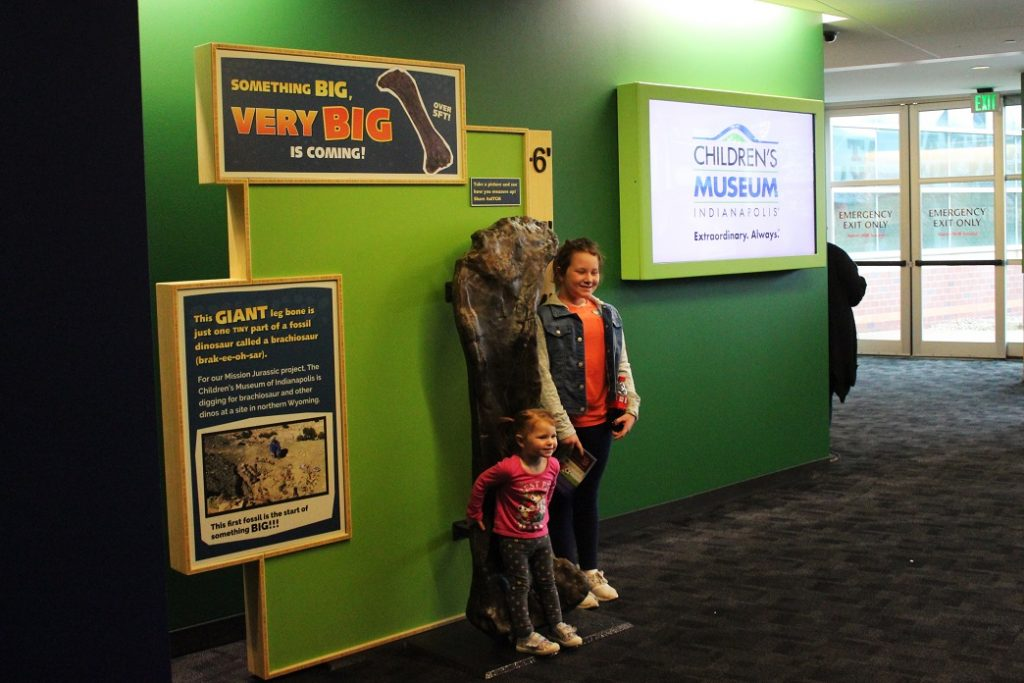 The femur excavated last fall, now on display at The Children's Museum of Indianapolis