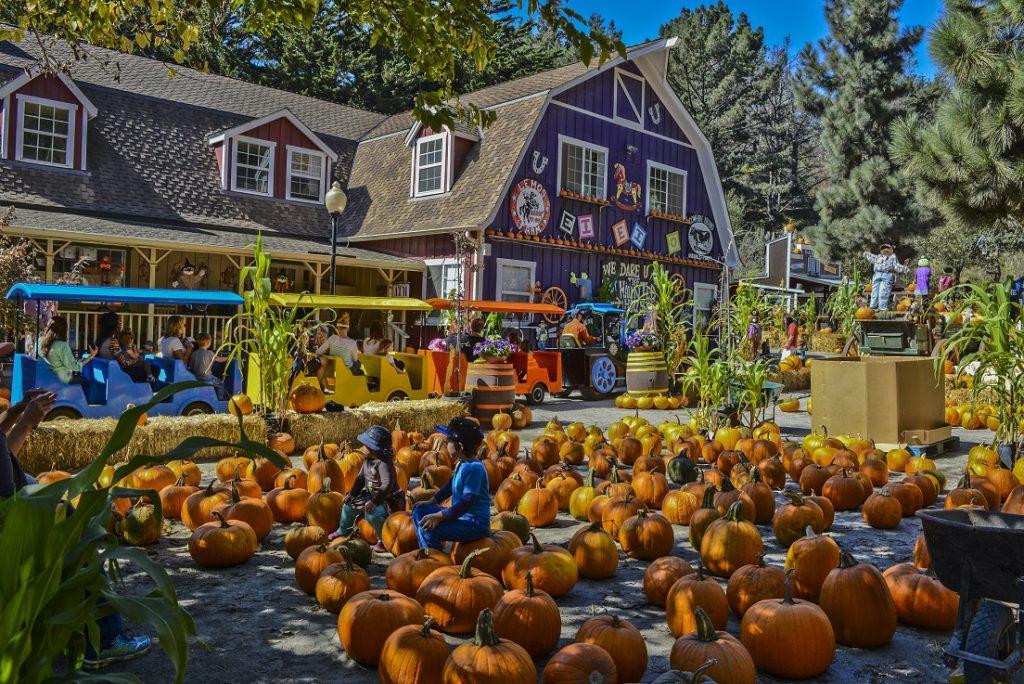 Half Moon Bay Pumpkin Fest