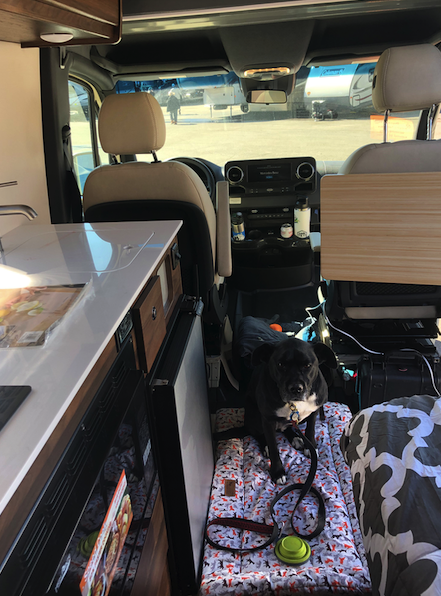 Trooper makes herself at home in the Winnebago Boldt