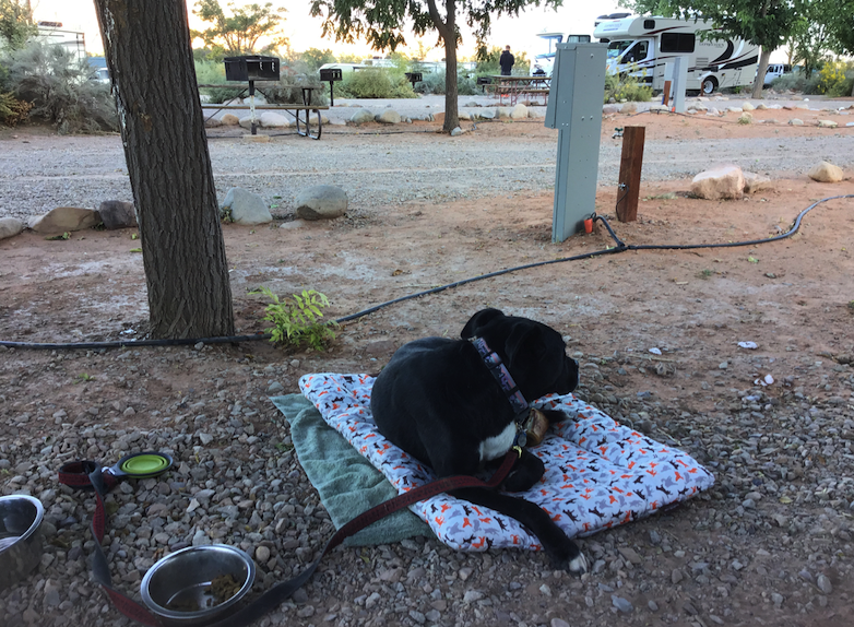 Trooper enjoys the evening air at the KOA Moab Campground