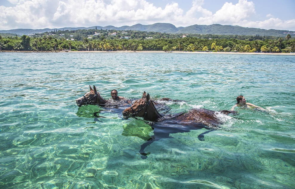 Swimming with horses is a popular activity offered by the Equestrian Centre at Half Moon Resort in Montego Bay, Jamaica
