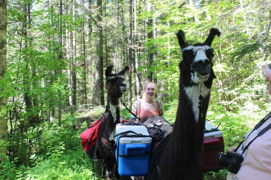Meeting up with pack llamas on our hike to Bond Falls