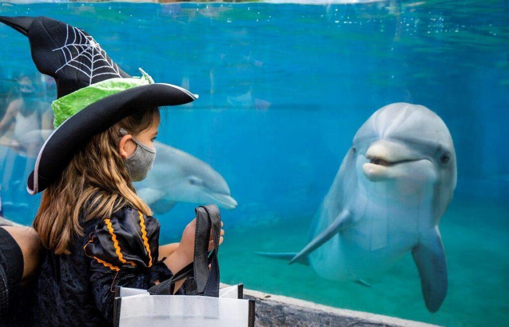 SeaWorld Halloween Spooktacular. (SeaWorld)