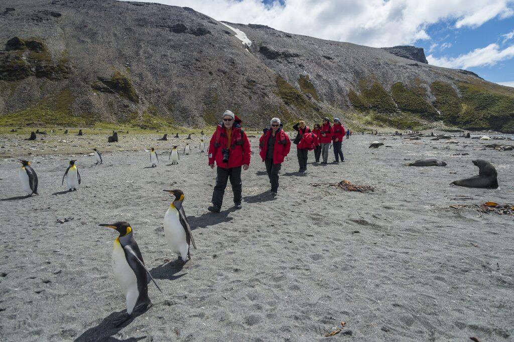 Amid the King Penguin colony on South Georgia Island 2016.