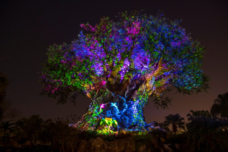 Disney's Animal Kingdom Lights Up for Evening Adventure