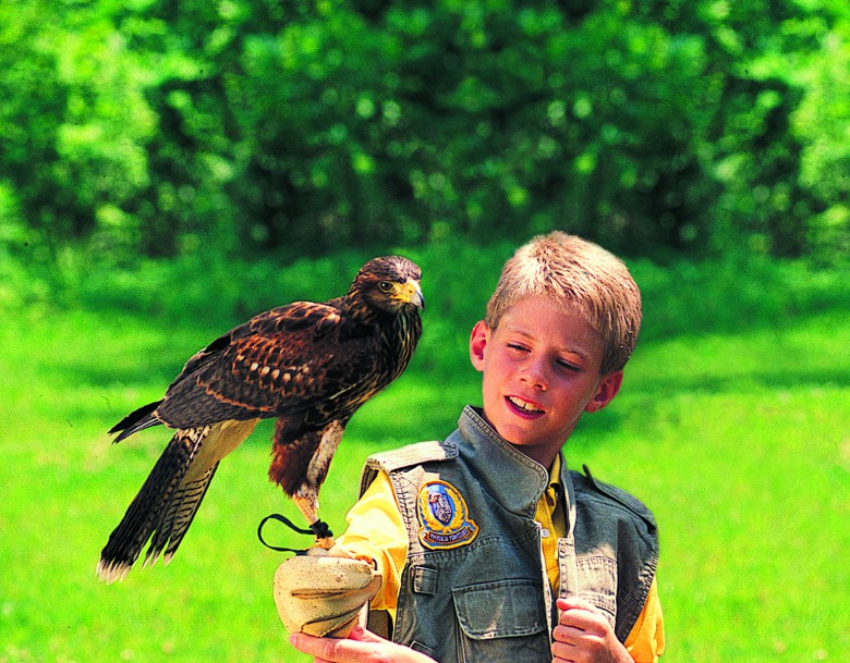 Falconry at the Greenbrier