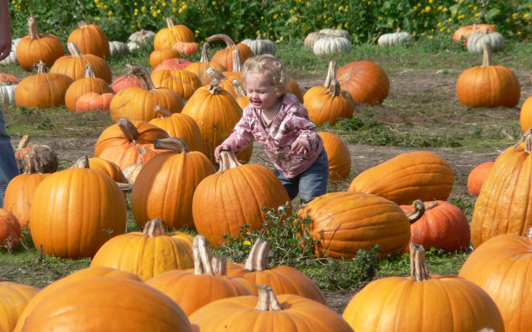 Get away from electronics to a fall festival or pumpkin patch