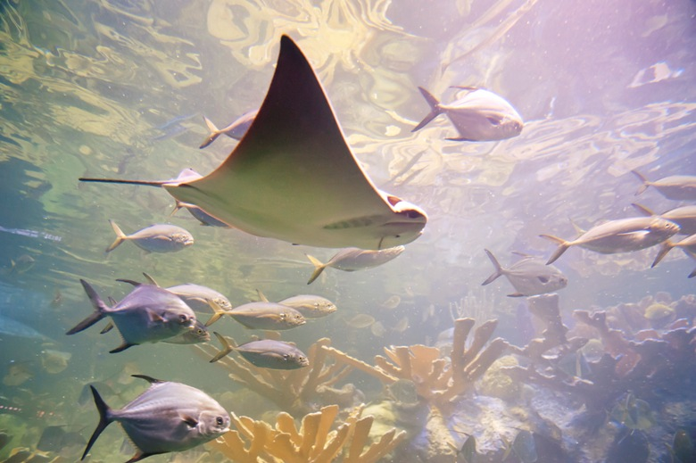 Families flock to aquariums in the fall for fun and learning