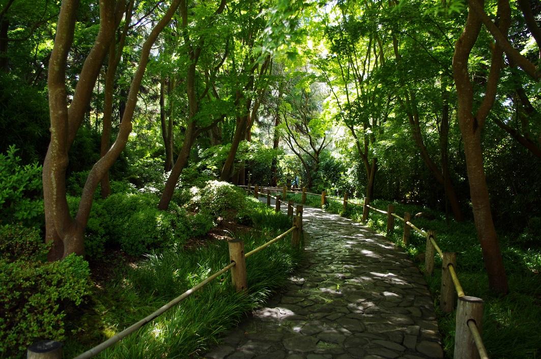A lane in the Japanese Tea Garden, San Francisco