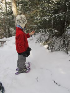 A young snowshoer examines a friendly fir tree