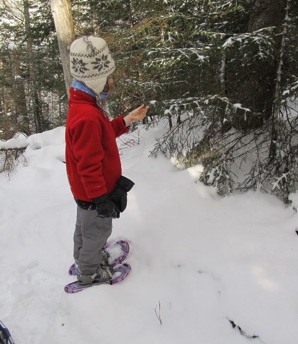 Families on a hike through the snowy woods of New Hampshire