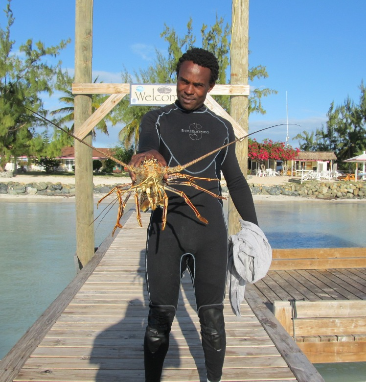 Carribean lobster caught by free diver off Anegada BVI