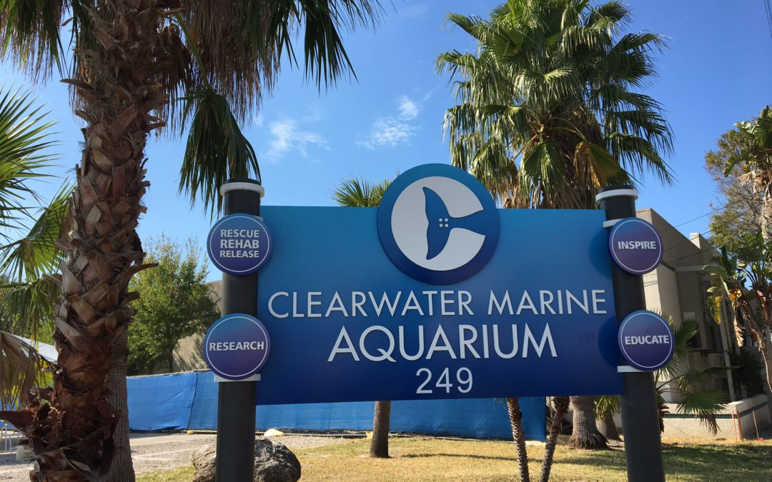 How they make it all happen in Clearwater FL