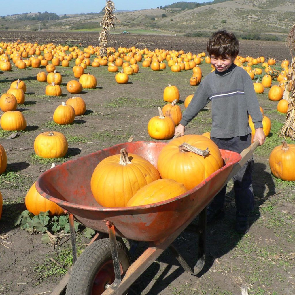 Columbus Day weekend celebrate all things pumpkin at the Half Moon Bay Art and Pumpkin Festival, one of the largest and oldest local festivals in California