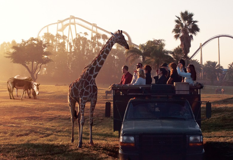 Families get up close and with the animals at Busch Gardens in Tampa