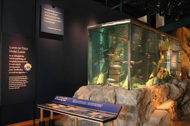Exhibit at Wild Center in Tupper Lake, NY