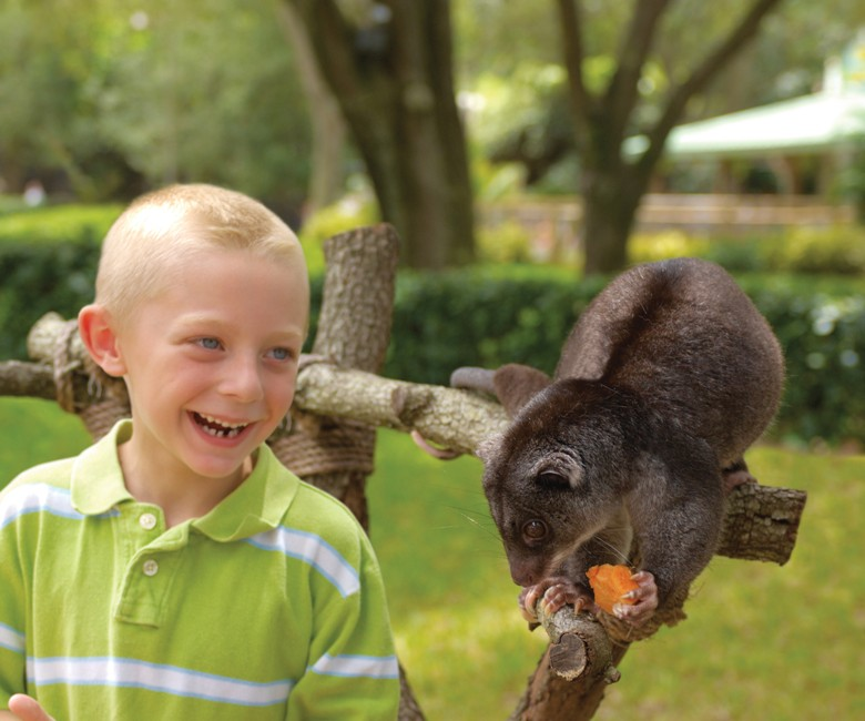 Get up close to the park's collection of animal ambassadors