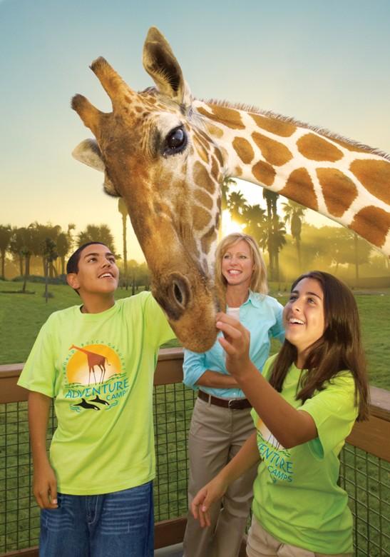 Giraffe feed teacher and class