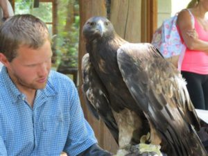 Golden Eagle at ACES