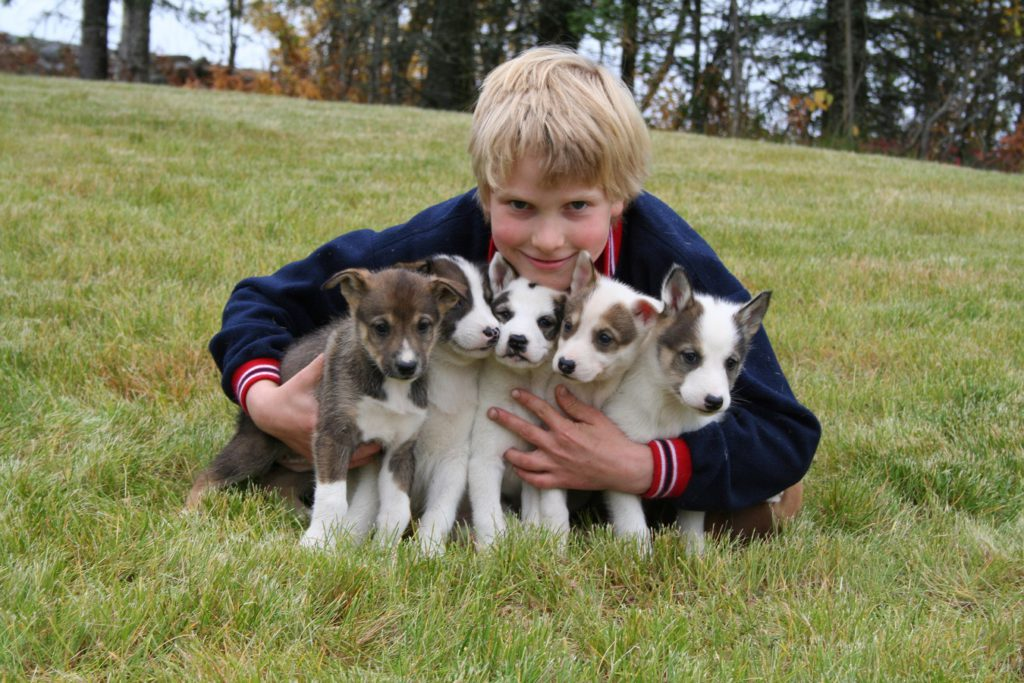 A sled dog experience in Alaska with Holland America tours