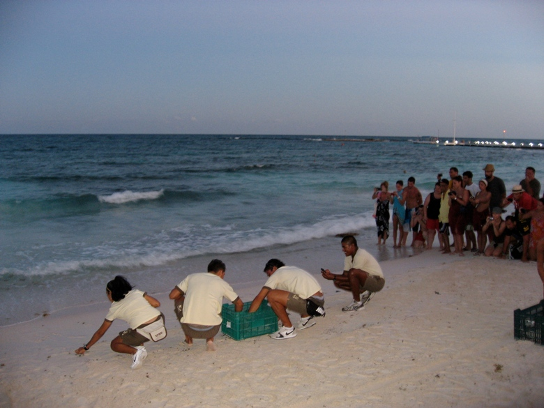 Experiencing the Sea Turtles and Other Wildlife in Riviera Maya