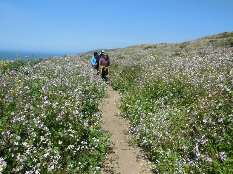 Hiking through wildflowers at Point Reyes