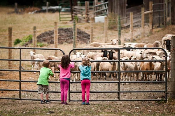 Leaping Lamb Farm in Oregon