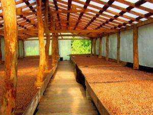MMC's cacao drying room