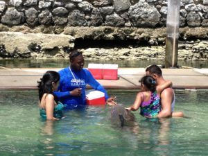 Meeting the dolphins on Grand Bahama