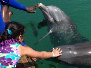 One on one with Bahamian sea life