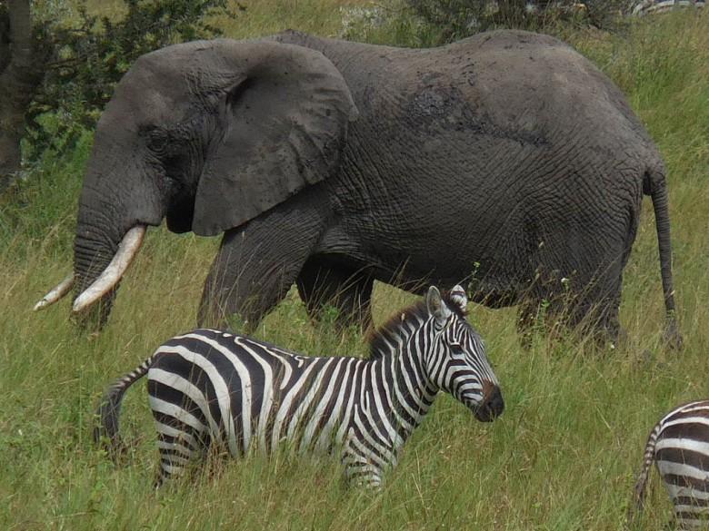 Jake and Tobey go on a Safari in Style in Tanzania