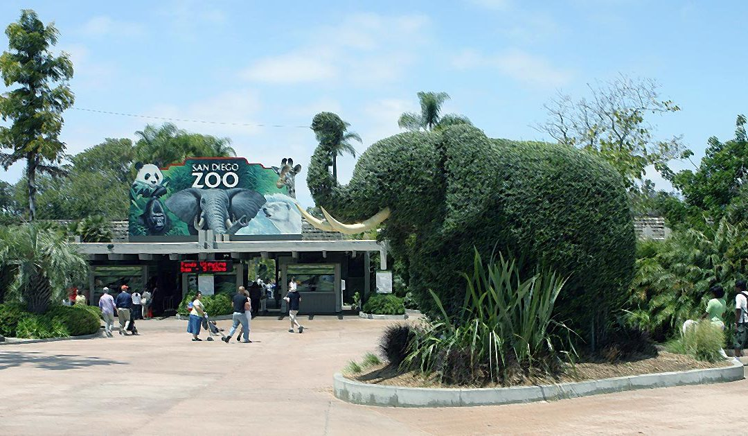San Diego is more than the Zoo; museums and arts abound in Balboa Park
