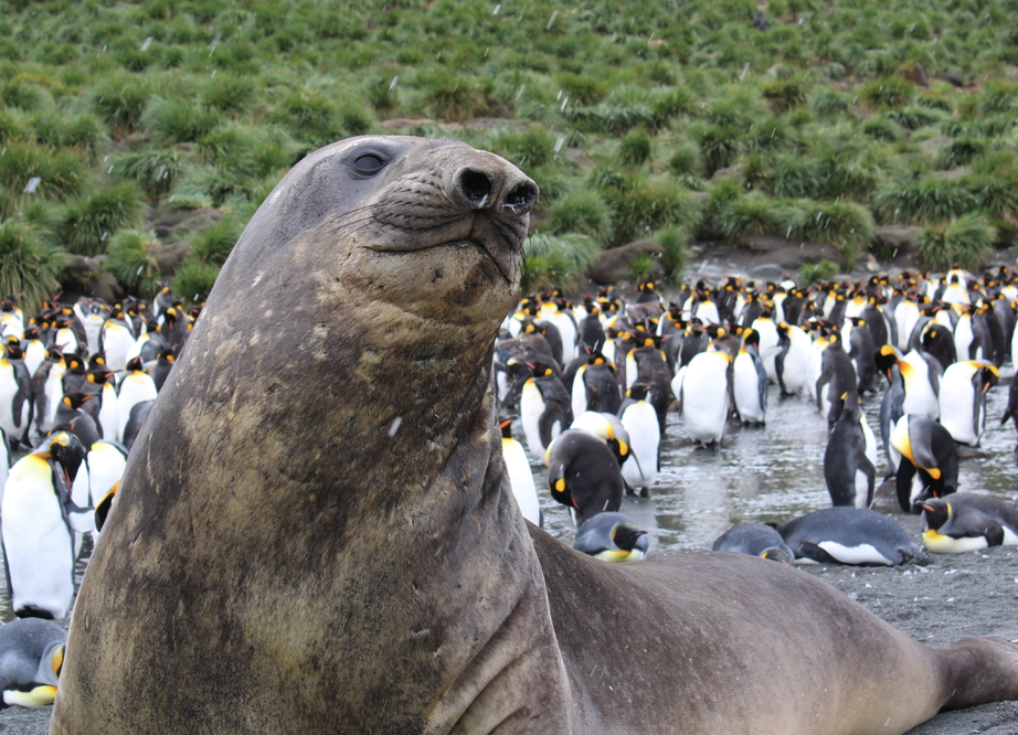To Antarctica, South Georgia and Falklands – a trip of a lifetime even for kids