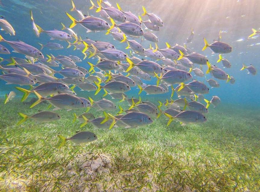 Snorkeling on Belize's great barrier reef – lots of fish!