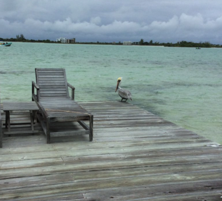 Fast Eddy the Pelican on one of our two private docks at Cayo Espanto