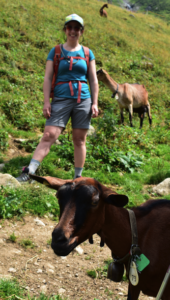 Goat encounter in the high alpine
