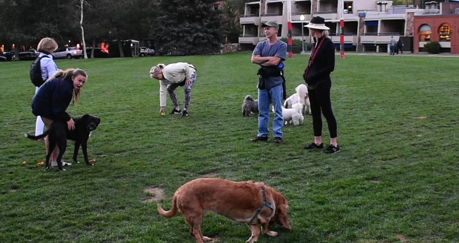 Fantastic doggie park in downtown Aspen
