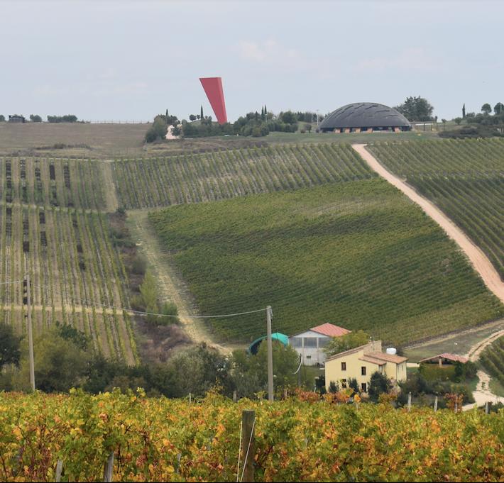 The Dionigi vineyards