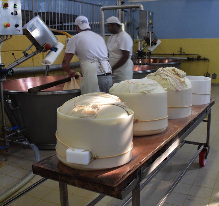 Very moist cheese is taken from milk and put into molding cartons. The remaining milk and whey is used in raising hogs and making ricotta cheese