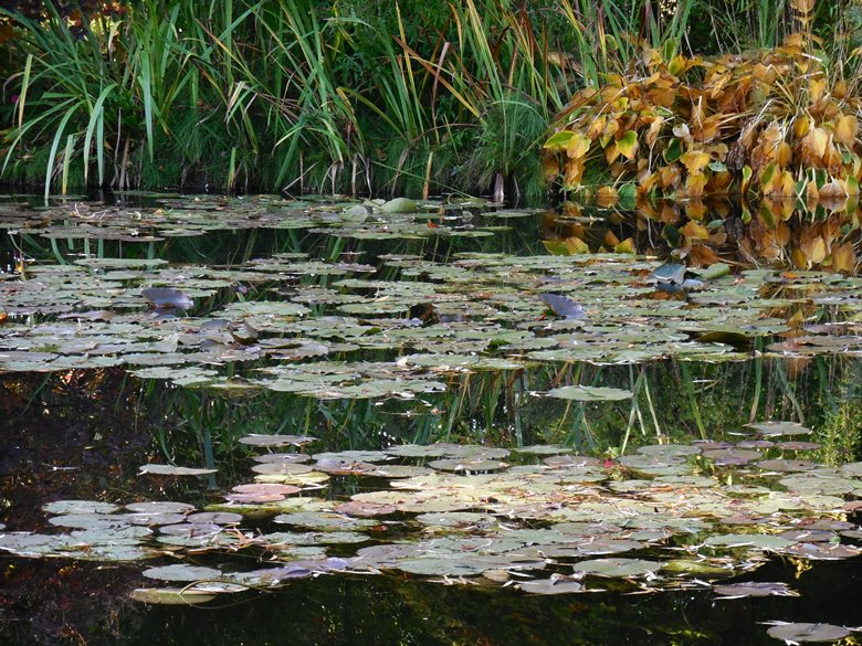 Cruising on the Seine River – a stop at Monet's Garden in Giverny