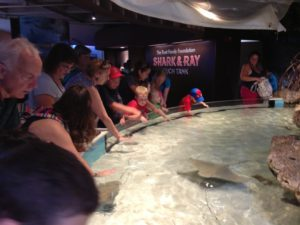 Touch tank is very popular at New England Aquarium in Boston