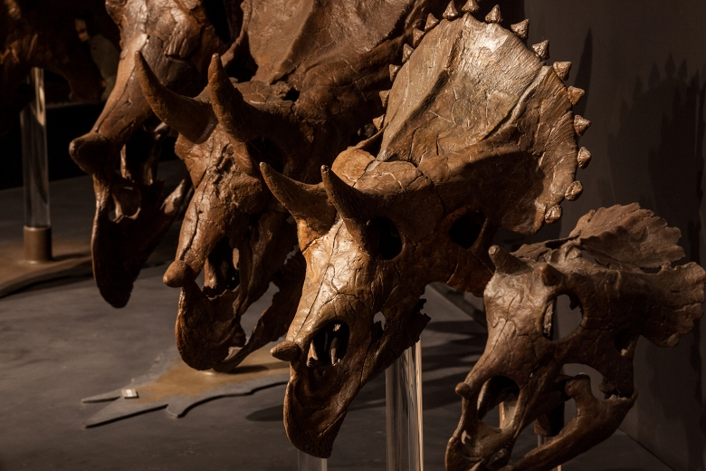 Five places for your kids to get up close and personal with dinosaurs