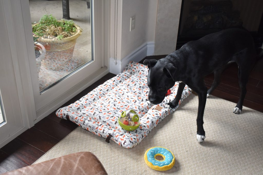 Trooper checks out P.L.A.Y. Outdoor Chill Bed and Wobbleball Toy