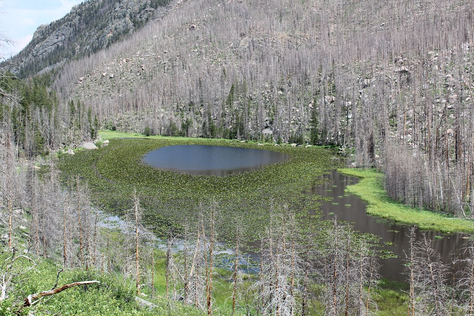 View of Cub Lake in Rocky Mountain National Park